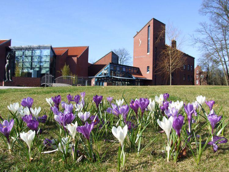 Im Vordergrund sieht man weiße und lilane Krokusse, im Hintergrund die Kunsthalle Emden mit der Malschule und dem Cafe Henris