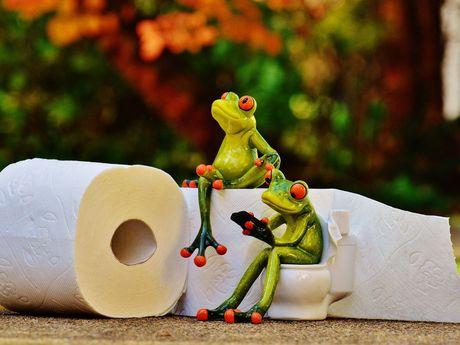 2 Keramikfrösche. Einer sitze mit Handy in der Hand auf einer Keramiktoilette, der andere auf einer Rolle Toilettenpapier.