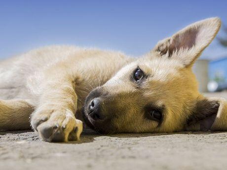 Nahaufnahme eines Hundewelpens der am Strand liegt.