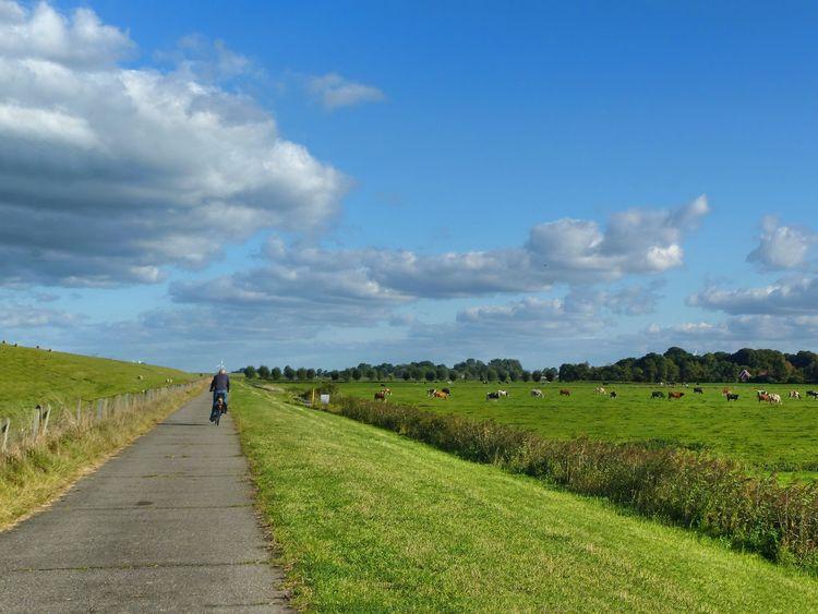 Zu sehen ist eine endlos weite Landschaft mit viel grün, blauem Himmel und ein paar Wolken. Am Deich fährt ein Radfahrer