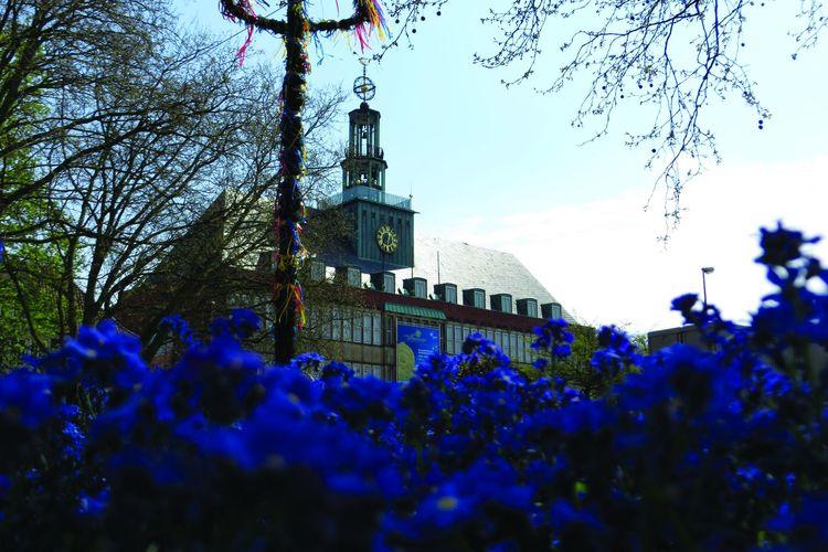 Lila Blumen im Vordergrund, dahinter ist der Maibaum zu sehen und im Hintergrund das Ostfriesische Landesmuseum