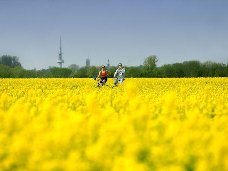 Ein Mann und eine Frau fahren mit dem Fahrrad durch ein Rapsfeld. Im Hintergrund sieht man einen grünen Baumstreifen, dahinter die Kirchturmspitzen der Neuen Kirche und der Martin Luther Kirche. Ausserdem den Fernmeldeturm